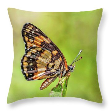 Throw Pillow featuring the photograph Colorful Butterfly by Anthony Dezenzio