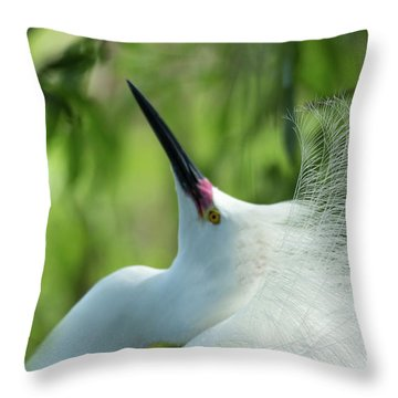 Come A Courting Throw Pillow