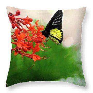Common  Birdwing Throw Pillow
