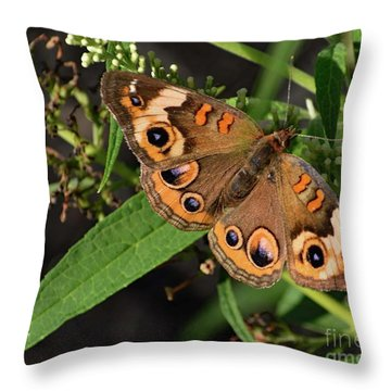 Common Buckeye Beauty On Display Throw Pillow