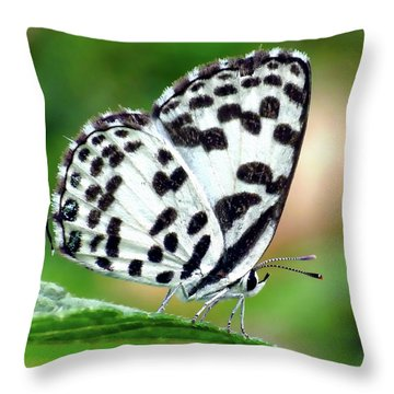 Throw Pillow featuring the photograph Common Pierrot Butterfly by Anthony Dezenzio