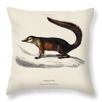 Common Treeshrew  Tupaia Glis Illustrated By Charles Dessalines D' Orbigny  1806-1876  Throw Pillow