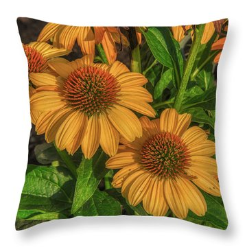 Throw Pillow featuring the photograph Coneflowers  by Guy Whiteley