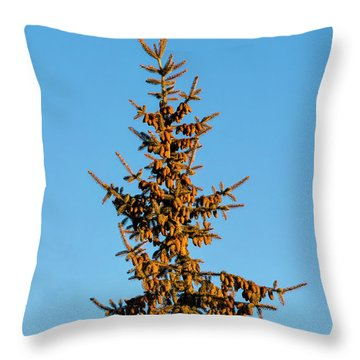 Throw Pillow featuring the photograph Cones by Jon Burch Photography