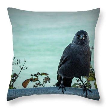 Cornish Crow Throw Pillow