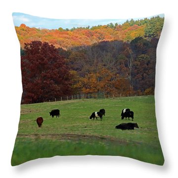 Throw Pillow featuring the photograph Cows Grazing On A Fall Day by Angela Murdock