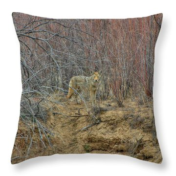 Coyote In The Brush Throw Pillow