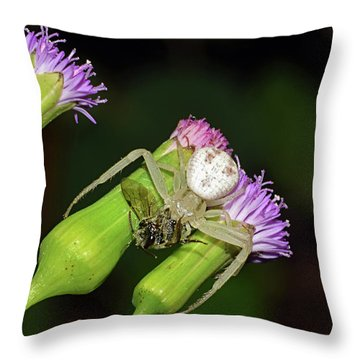 Crab Spider With Bee Throw Pillow