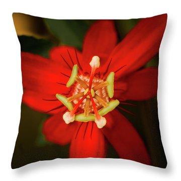 Crimson Beauty Throw Pillow