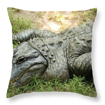 Throw Pillow featuring the photograph Crocodile Outside by Rob D Imagery