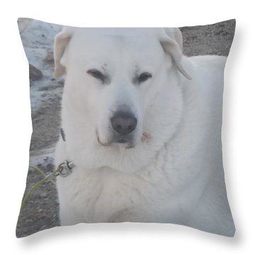 Cuda Throw Pillow