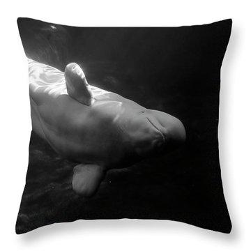 Curious Beluga Throw Pillow
