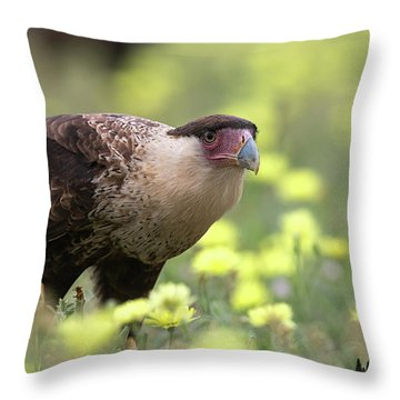 Curious Caracara Throw Pillow