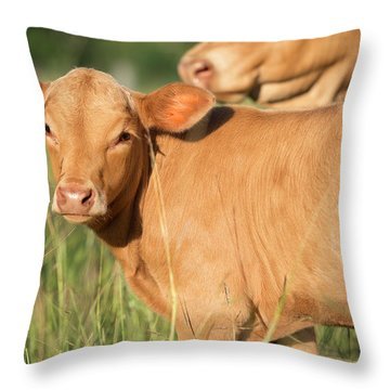 Throw Pillow featuring the photograph Cute Calf by Rob D Imagery