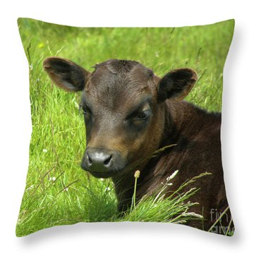 Cute Cow Throw Pillow