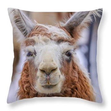 Cute Llama Throw Pillow