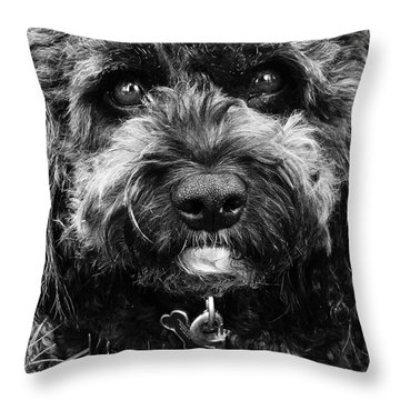 Throw Pillow featuring the digital art Cutest Dog On The Planet by Cindy Greenstein