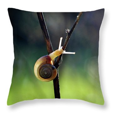 Throw Pillow featuring the photograph Cutie Pie by Michelle Wermuth