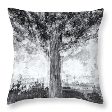 D1651p Throw Pillow