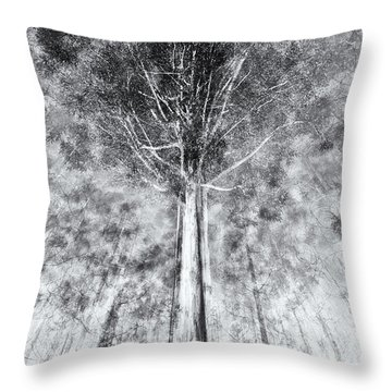D1654p Throw Pillow