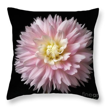 Dahlia 'chilson's Pride' Throw Pillow