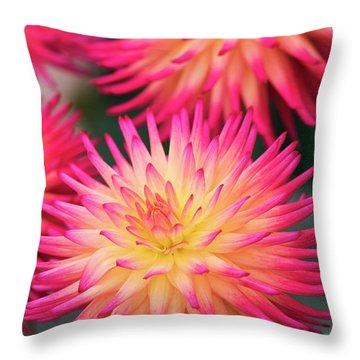 Throw Pillow featuring the photograph Dahlia Josudi Tel Star Flowers  by Tim Gainey