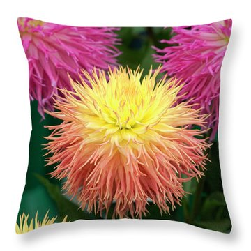 Throw Pillow featuring the photograph Dahlia Normandie Frills Flowers by Tim Gainey