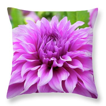 Throw Pillow featuring the photograph Dahlia Vassio Meggos by Tim Gainey