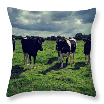 Dairy Heifers Throw Pillow