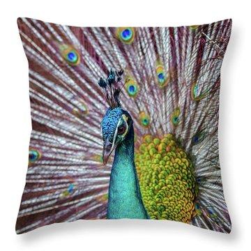 Dancing Indian Peacock  Throw Pillow