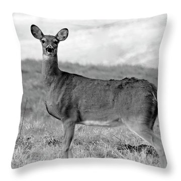 Throw Pillow featuring the photograph Deer In Black And White by Angela Murdock