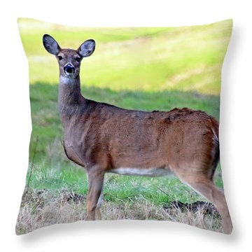 Throw Pillow featuring the photograph Deer Standing In A Field by Angela Murdock
