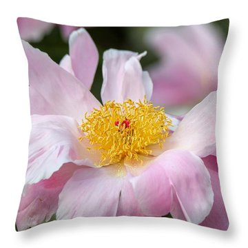 Delicate Pink Peony Throw Pillow