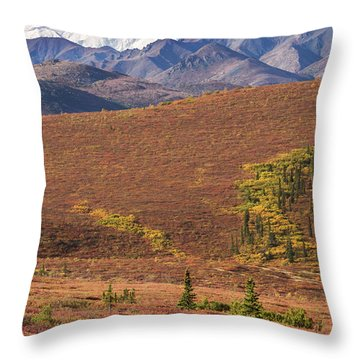 Throw Pillow featuring the photograph Denali Grizzly by Tim Newton