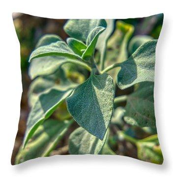 Desert Plant Life Throw Pillow