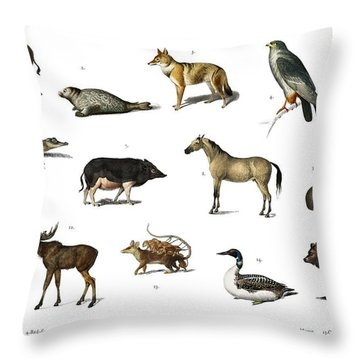 Different Types Of Animals Illustrated By Charles Dessalines D' Orbigny  1806-1876 3 Throw Pillow