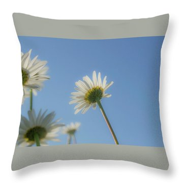 Distracted Daisies Throw Pillow