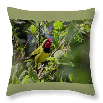 Doherty's Bushshrike Throw Pillow