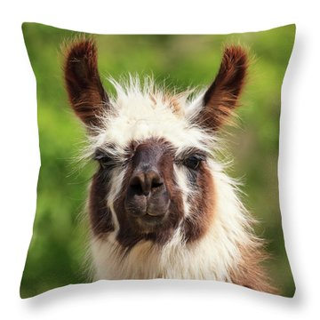 Don't Hate Me Because I'm Beautiful Throw Pillow
