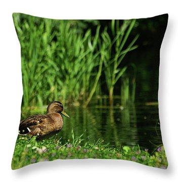 Dreaming Duck Throw Pillow