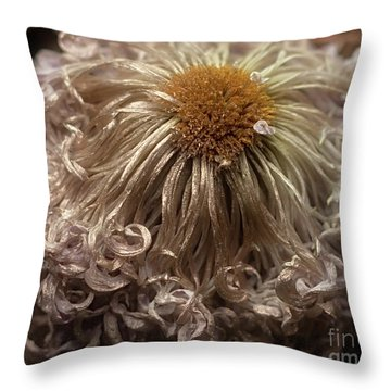 Throw Pillow featuring the photograph Dried Chrysanthemum 'satin Ribbon' by Ann Jacobson