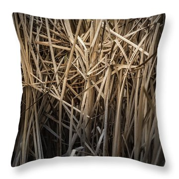 Dried Wild Grass II Throw Pillow