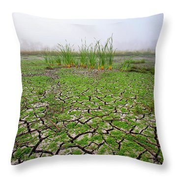 Dry Duck Pond Throw Pillow
