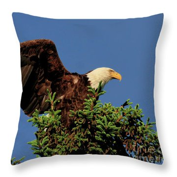 Eagle In Treetop Throw Pillow