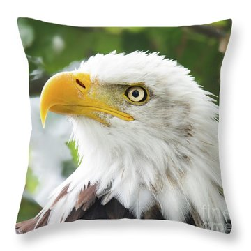 Bald Eagle Perched In A Tree Throw Pillow