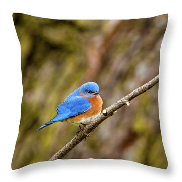 Throw Pillow featuring the photograph Eastern Bluebird by Jeff Phillippi