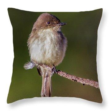 Eastern Pheobe Throw Pillow