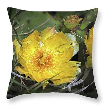 Throw Pillow featuring the photograph Eastern Prickley Pear Cactus Flower On Assateague Island by Bill Swartwout Fine Art Photography