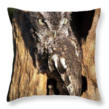 Eastern Screech Owl 92515 Throw Pillow