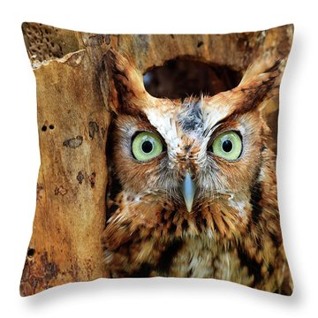 Eastern Screech Owl Perched In A Hole In A Tree Throw Pillow